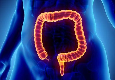 O intestino grosso é a porção final do sistema digestório