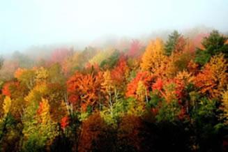 Caracterísitica de uma floresta temperada