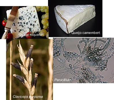 Os fungos são organismos muito importantes econômica e ecologicamente