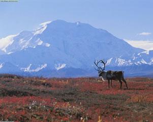A tundra permanece congelada a maior parte do ano.