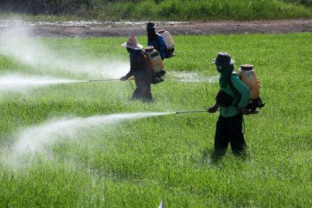 Os isonitrilos são utilizados na produção de pesticidas