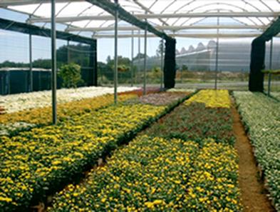 As estufas dificultam a saída do calor, o que mantém as plantas em um ambiente com temperatura controlada