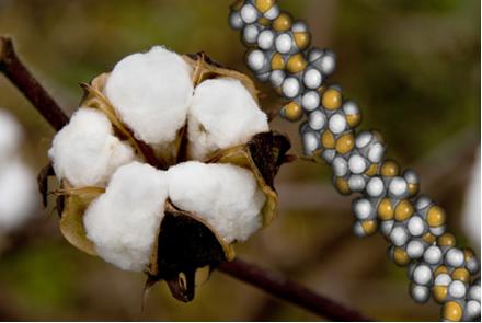 O algodão é celulose quase pura