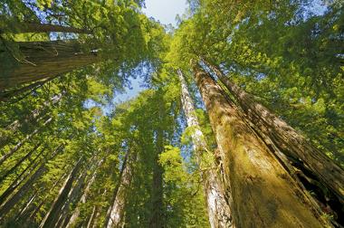 Os biomas constituem-se de diferentes formas a depender das condições que os envolvem