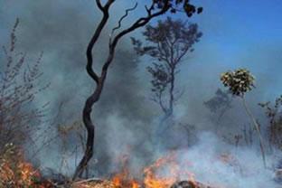 As queimadas provocam um profundo desequilíbrio ambiental.