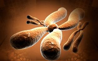 Algumas doenças são determinadas por genes presentes apenas no cromossomo X