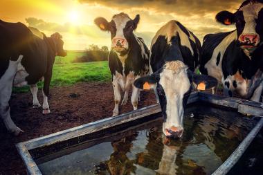 A pecuária divide-se em dois sistemas: intensivo e extensivo