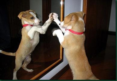 A imagem do cachorro formada no espelho é virtual, direita e possui as mesmas dimensões
