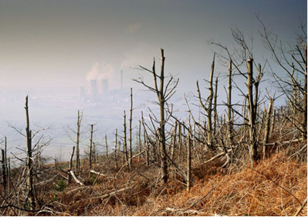 Árvores danificadas pelos efeitos da chuva ácida, causada pela poluição de indústrias próximas