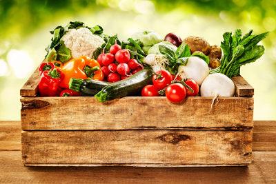 As fibras alimentares são fundamentais para o funcionamento do intestino