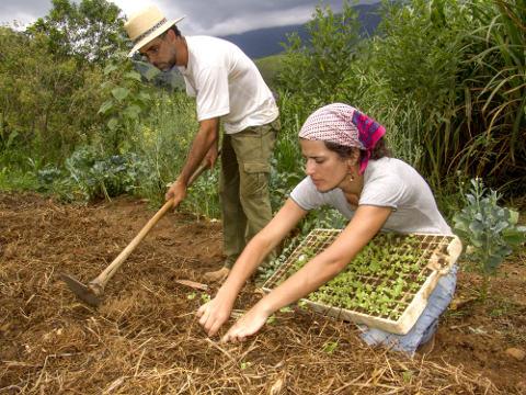 A política de reforma agrária tem por objetivo diminuir a concentração fundiária e democratizar o acesso à terra *