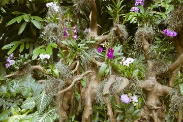As orquídeas são exemplos de plantas epífitas, ou seja, que vivem sobre outras plantas
