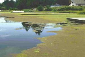 Ambiente comprometido pela eutrofização.