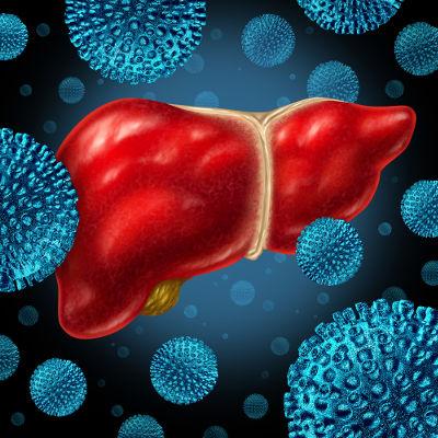 As hepatites virais são causadas por vírus que provocam inflamação no fígado