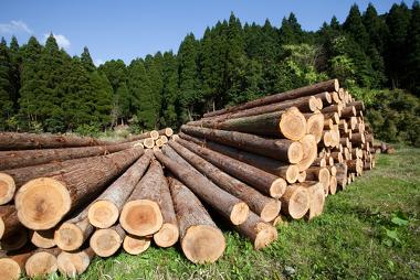 A madeira é uma importante matéria-prima