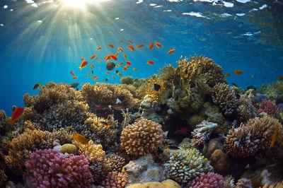 Os recifes de coral destacam-se por sua grande biodiversidade