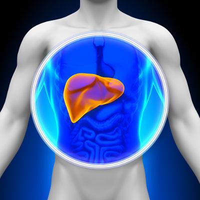 O glicogênio é armazenado em diferentes tipos celulares, principalmente em células musculares e no fígado