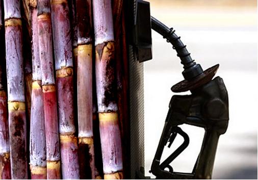No Brasil, a principal forma de obtenção do etanol é por meio da cana-de-açúcar.