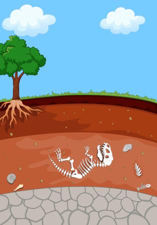 Além de estudar estruturas dos seres vivos, a Paleontologia também pode estudar os vestígios de determinado organismo