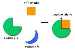 """Esquema genérico do modelo chave-fechadura. O local de """"encaixe"""", nas enzimas, é chamado de centro ativo."""