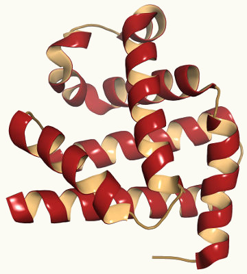 Estrutura da mioglobina, proteína que compõe os músculos