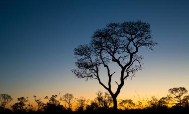 Paisagem típica do Cerrado. Na frente da imagem, um Ipê