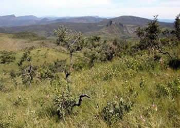 Cerrado: bioma predominante no Distrito Federal