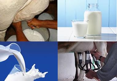 O leite é um alimento rico em nutrientes e importante em uma alimentação balanceada