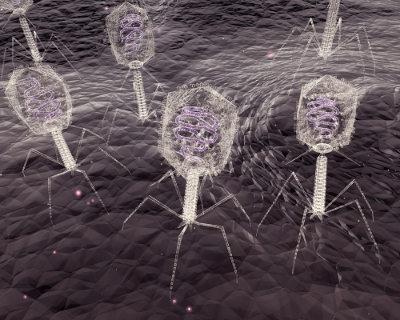 Bacteriófagos são vírus com capacidade de infectar bactérias