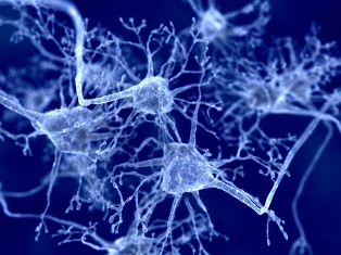 A adrenoleucodistrofia causa a destruição da bainha de mielina, afetando assim a propagação do impulso nervoso