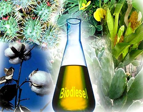 Os óleos dos vegetais mostrados na figura (mamona, algodão, amendoim, milho e palma) podem ser utilizados para a produção do biodiesel