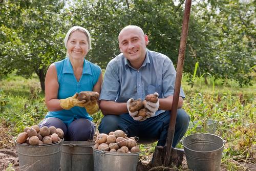 A agricultura familiar baseia-se nas pequenas propriedades