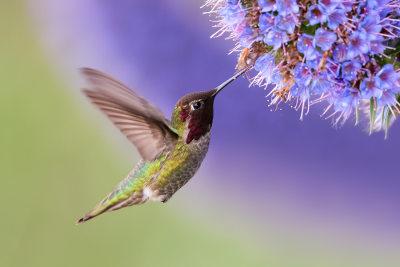 As aves possuem diversas adaptações que garantem o voo