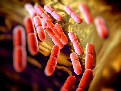 Todos os seres vivos, com exceção dos vírus, possuem células