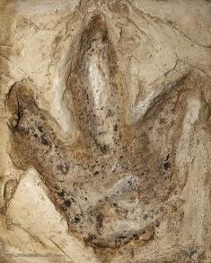 As pegadas são vestígios da existência de um ser vivo