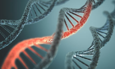 Algumas características são determinadas por mais de um gene