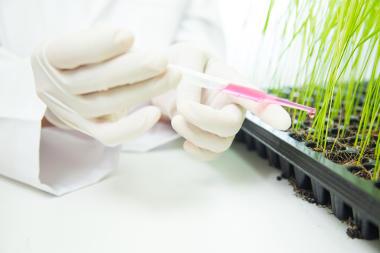 A biotecnologia pode operar a partir da alteração genética dos produtos agrícolas