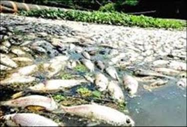A poluição térmica provoca a diminuição do teor de oxigênio dissolvido na água, provocando a morte de vários organismos