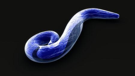 O Plasmodium é um exemplo de organismo que se reproduz por divisão múltipla