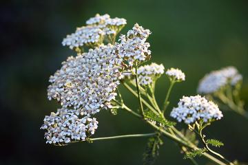 As plantas são organismos autotróficos que produzem seu alimento graças à fotossíntese