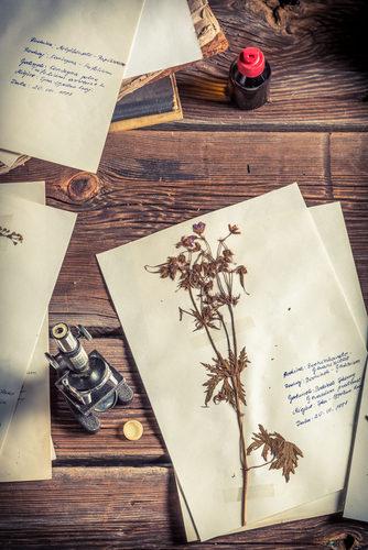 Os herbários fornecem informações sobre a biodiversidade