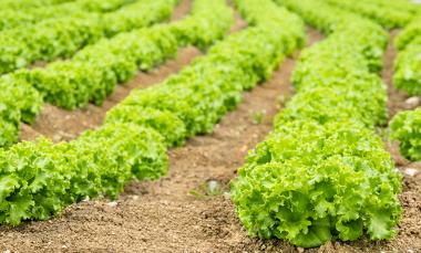 No setor primário, matérias-primas e alimentos são produzidos