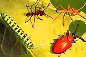 Alguns representantes dos insetos.