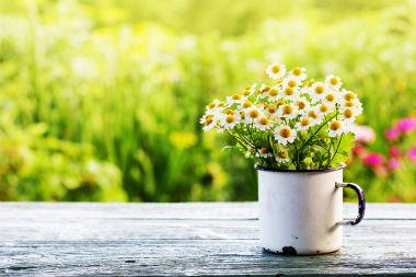 A primavera, em muitos lugares, está associada ao rejuvenescimento da flora