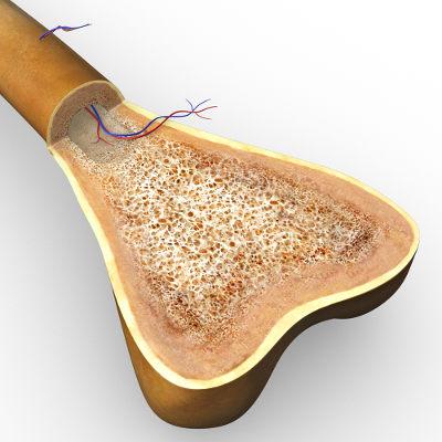 O osso é formado por tecido ósseo