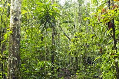 Em razão de sua grande biodiversidade, a Floresta Amazônica é alvo constante de biopirataria