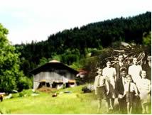A chegada dos imigrantes ao Brasil foi o motivo central para a aprovação da Lei de Terras.