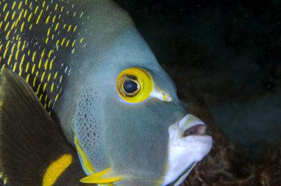 Os peixes são animais adaptados ao ambiente aquático