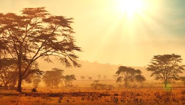 Paisagem típica das savanas