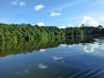 Floresta amazônica, a maior floresta tropical do mundo